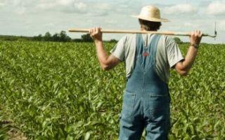 Льготы сельхозпроизводителям в 2020 году (как оформить)