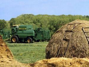 Субсидии для сельского хозяйства на развитие в 2020 году: как оформить